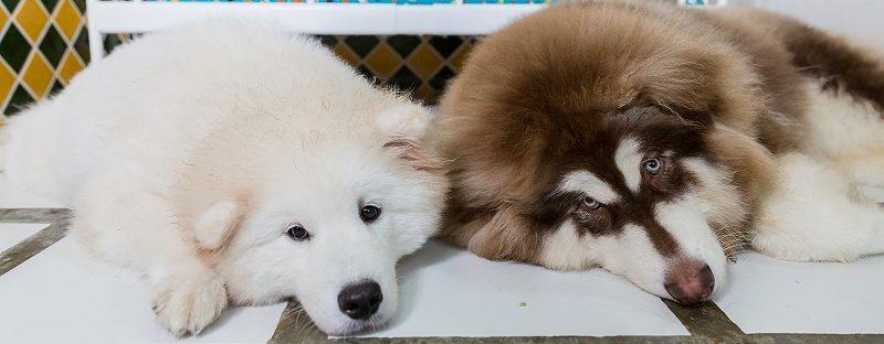 犬の社会性が向上する? ペットホテルに預けるメリットを詳しく紹介!