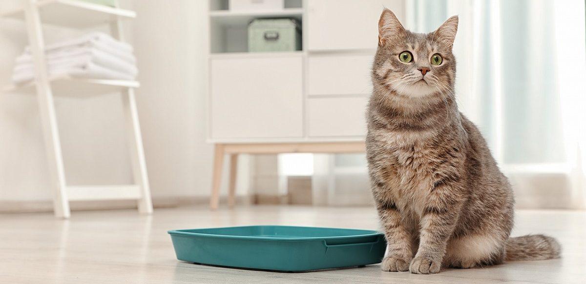 ペットホテルに猫を預けるときにトイレが不安? 注意点をご紹介!