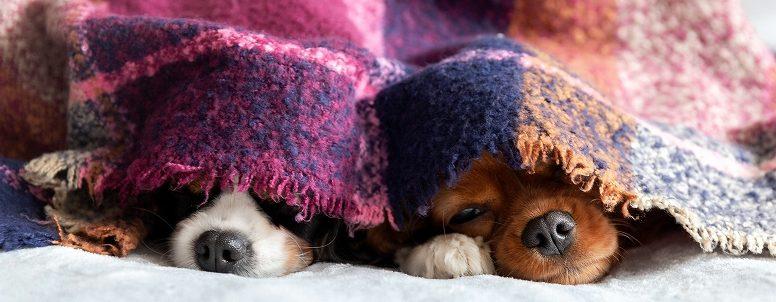 ペットホテルでのケガの対処やケガや持病のあるペットの預け方