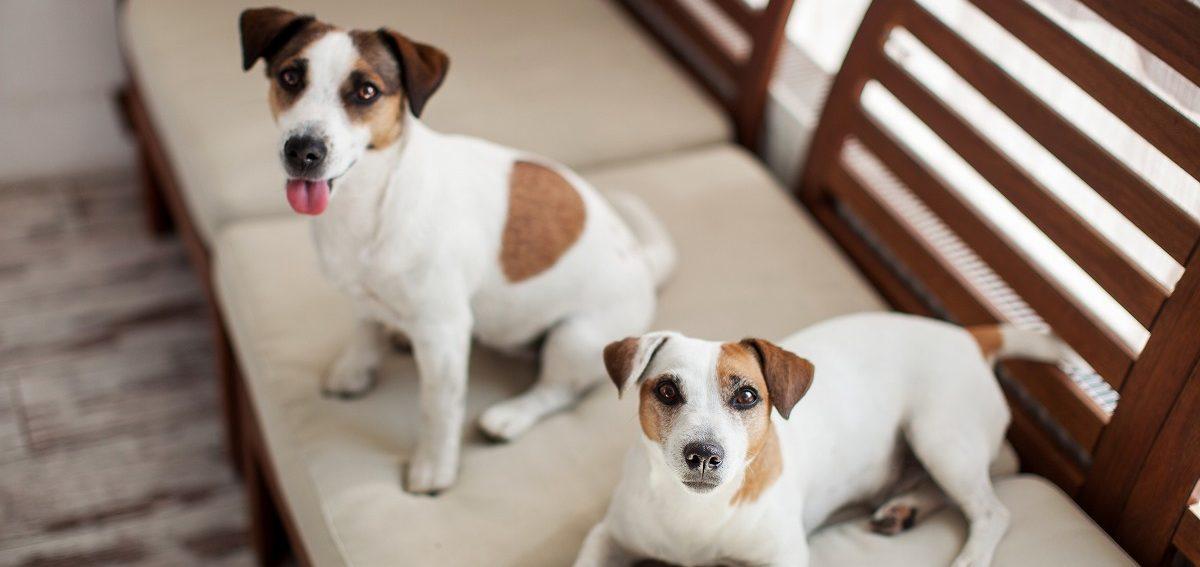 犬にとってストレスの少ないペットホテルとは?