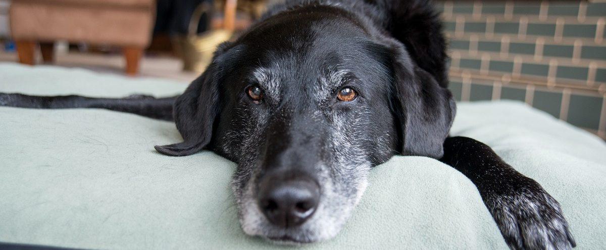 ペットホテルを利用したいけど年齢制限はあるの?愛犬の場合をご紹介