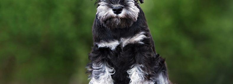 吠える犬はNG? 犬が吠える理由や対策方法を紹介します!