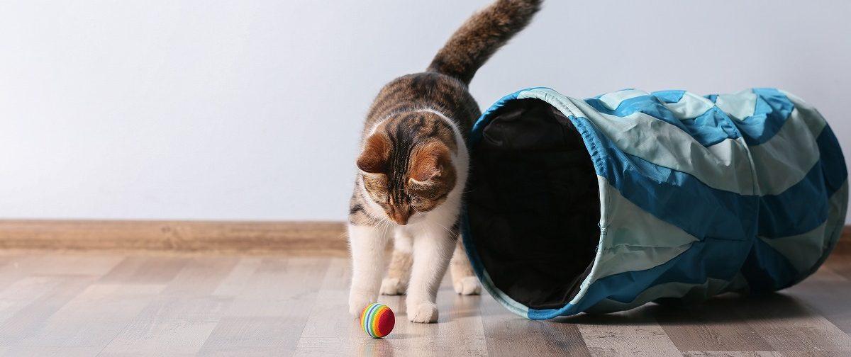 猫をペットホテルに預ける時の注意点や準備するものを徹底解説!
