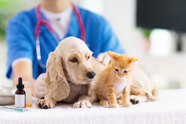 ペットホテルを利用したいけどワクチン接種は必要? ペットホテル利用のマナー