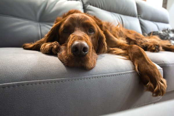 病気を抱える犬や高齢犬でも安心できるペットホテルの選び方