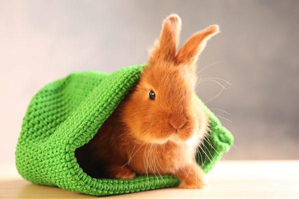本当に安心できる? ペットホテルに小動物を預ける際の注意点を解説!