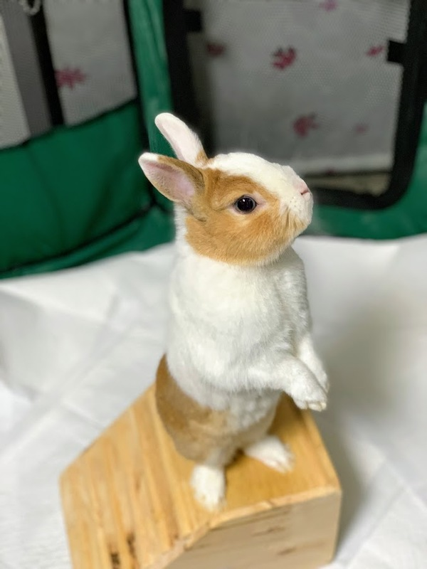 可愛いウサギの フラシューさん♬