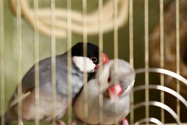 ペットの種類別・ペットホテルに預ける際の注意点解説~鳥類~