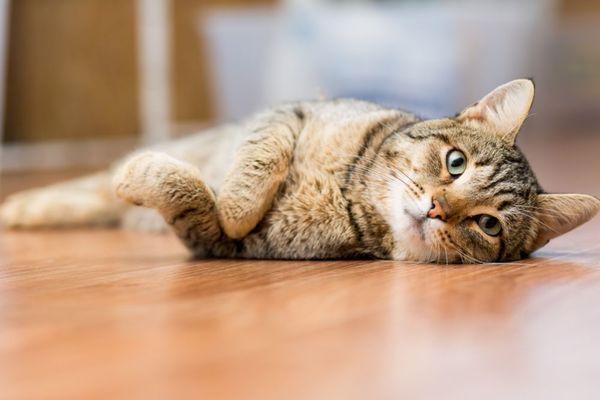 猫種別・ペットホテルに預ける際の注意点解説~ミックス(雑種)~